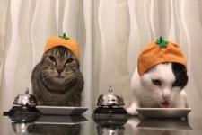 Katzen trainiert