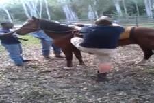 Immer Vorsicht mit dem Pferd