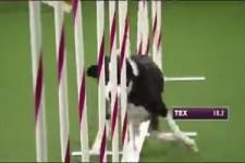 Hunde-Parkour