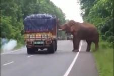 Essen auf Rädern für Elefanten