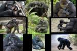 Zärtliche-Affenmütter.pps auf www.funpot.net
