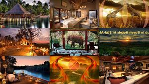 Urlaub in Busch Hotels in Süd - Afrika