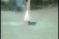 Mutiger Hund