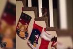 Lustige-Weihnachtsvideos-mit-Tieren.mp4 auf www.funpot.net