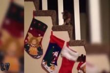 Lustige Weihnachtsvideos mit Tieren