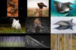 Australian-Geographic---Natur-Fotograf-des-Jahres-2017.ppsx auf www.funpot.net