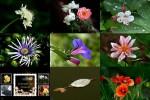 Le-Quattro-stagioni---Die-vier-Jahreszeiten.ppsx auf www.funpot.net