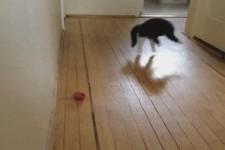 Katze spielt verrückt