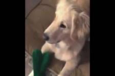verspielter Hund