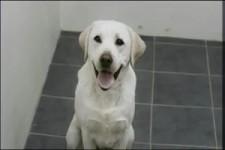 Hundevermittlung im Tierheim