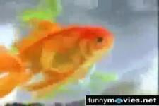 Erfinderischer Fisch