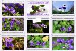 Das-Veilchen-und-der-Schmetterling.pps auf www.funpot.net