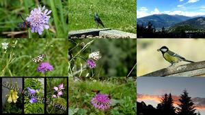 Buntes aus dem Wallis - (Natur und Tiere)