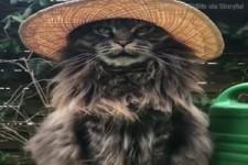 Lustige Katze mit Hut