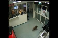 Ein unerwarteter Besucher in einer Intensivstation