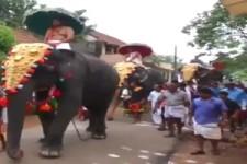 Immer Vorsicht vor dem Elefanten