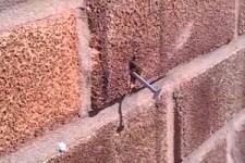 Biene entfernt Nagel aus der Wand