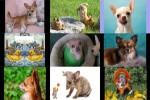 Chihuahua-oder-Chiwawa.pps auf www.funpot.net