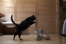 Katzen-Rollator