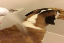 So lässt sich ein Hund duschen