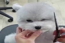 Hundekosmetik