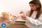 Lustige-Hunde.mp4 auf www.funpot.net