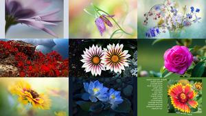 Blossoming Dreams - Blütenträume