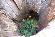 Besonderes Nest