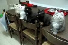 Ganz gebannte Katzen