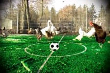 - Chicken - Hühnerfußball P1 WMV580