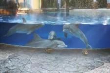 Eichhörnchen und Delfine