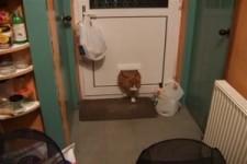 Auf Krawall gebürstete Katze
