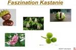 Faszination-Kastanie.pps auf www.funpot.net