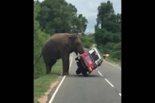 Falsches Gefährt für eine Safari