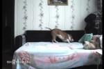 Hund-darf-eigentlich-nicht-aufs-Bett.mp4 auf www.funpot.net