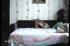 Hund darf eigentlich nicht aufs Bett