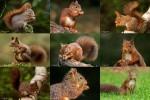 Eekhoorntjes---Eichhörnchen.ppsx auf www.funpot.net