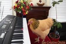 Talentvolle Huhn spielt Piano Keyboard