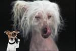 Schüttelhunde.mp4 auf www.funpot.net