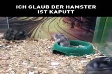 Der Hamster ist kaputt