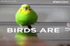 Coole Vögel