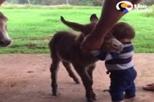 Animals who LOVE Hugs - Tiere, die Umarmungen lieben