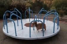 Hunde-Laufrad