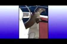 Seeloewenbaby rettet sich zu Menschen auf Boot