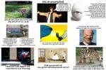 Knittelverse-Nr.-140.pps auf www.funpot.net
