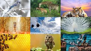 Tiere allerlei 9