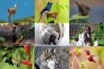 Tiere-allerlei-8.ppsx auf www.funpot.net
