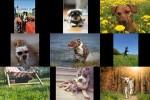 Bilder-Galerie---Hunde.pps auf www.funpot.net