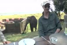Elefant mischt die Essenstafel auf