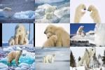 Eisbären.ppsx auf www.funpot.net